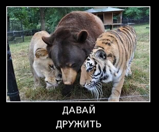 Демотиватор - О дружбе животных