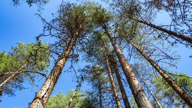 Прикрываются больными: Как чиновники воруют русский лес в Иркутской области
