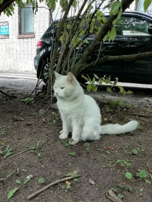 Отогрейте бывшедомашнего кота и он станет для вас тёплым и нежным облачком!