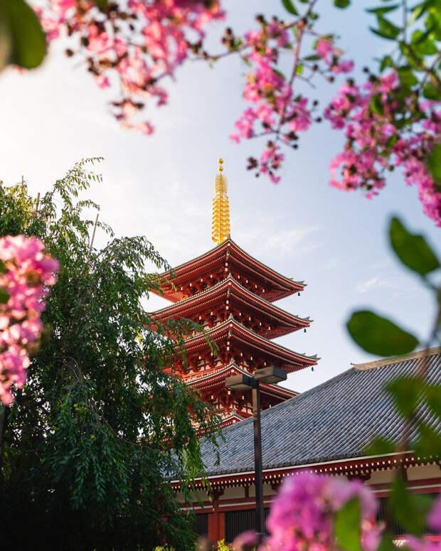Весна красна: лучшие снимки фотоконкурса Spring 2020