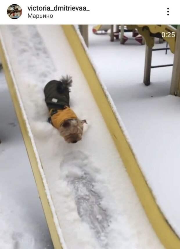 Фото дня: собака в Марьине почистила горку
