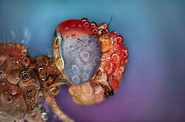 Восхитительные макрофотографии насекомых