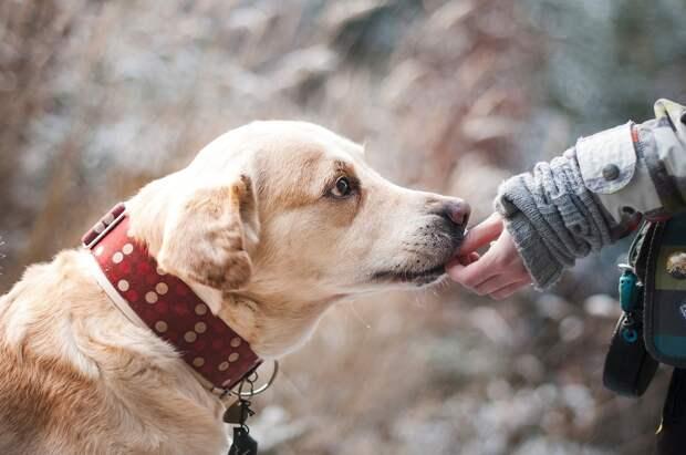 Названа самая любимая у москвичей порода собак