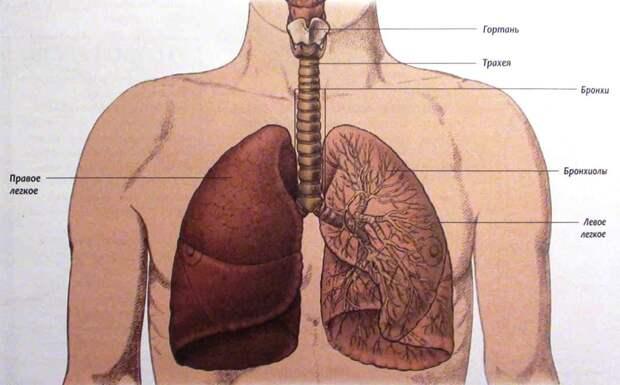 Очищение легких от слизи, мокроты и восстановление полноценного дыхания