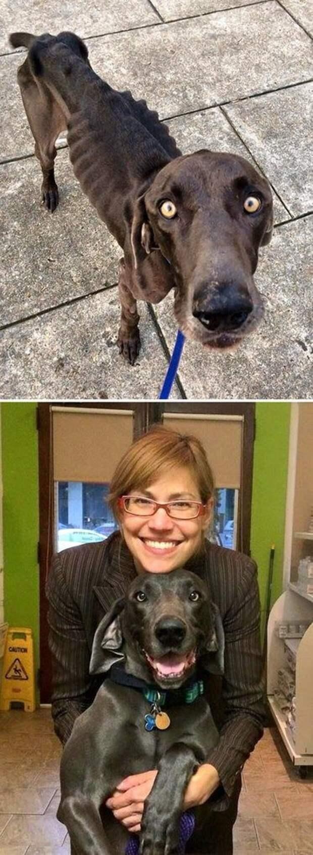 Невероятные фотографии собак до и после спасения