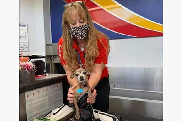 Собака спряталась в багаже и едва не заставила хозяев платить за перевес