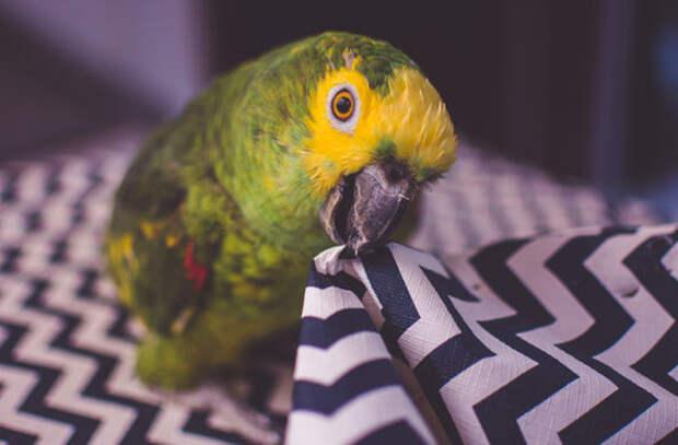 Попугай заказал на Амазоне любимую закуску
