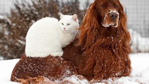 В России планируют маркировать домашних животных