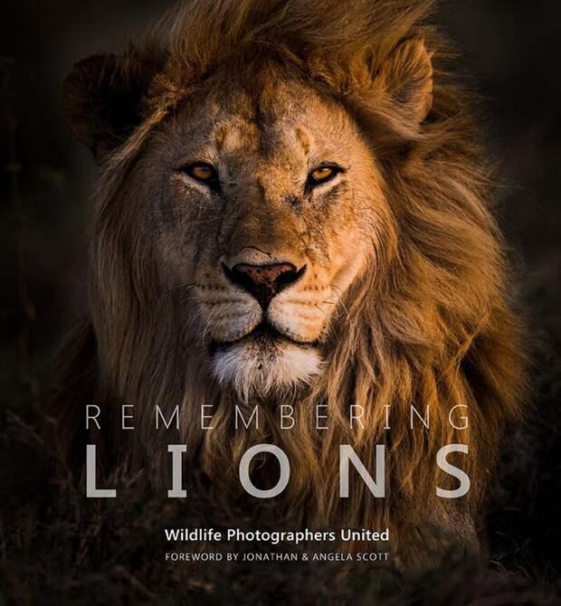 """Презентация книги """"Remembering Lions"""" ожидается в октябре 2019 года в Лондоне дикая природа, дикие животные, животные, лучшие фото, львы, подборка, фото, хищники"""