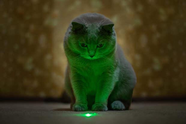 «Самый невозмутимый вмире» кот рассмешил пользователей