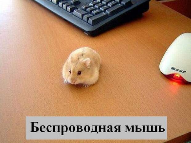4953664_radionetplus_ru_m_koshachi31 (700x525, 96Kb)