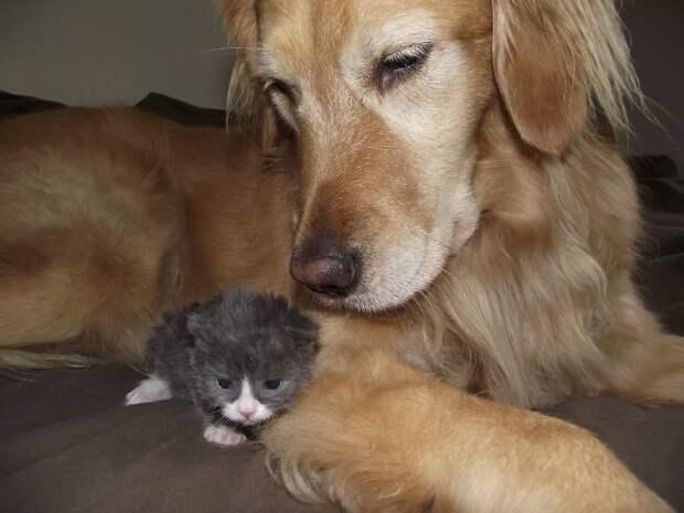 Маленький кот по прозвищу «Мышонок» родился совсем не обычным… И вот в кого он вырос сейчас!