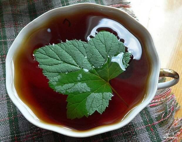 Когда собирать лист смородины для чая?