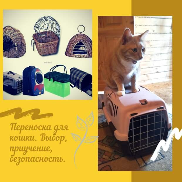 Переноска для кошки. Выбор, приучение, безопасность.
