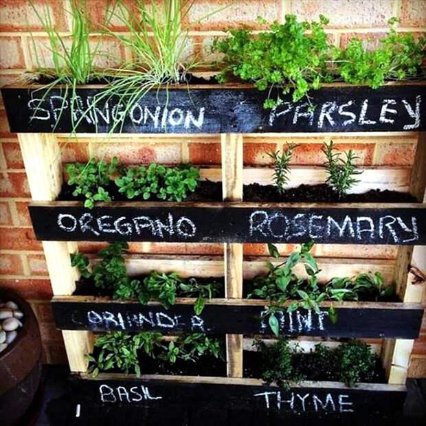 Выращивание трав в поддоне. | Фото: HomeArchite.com.