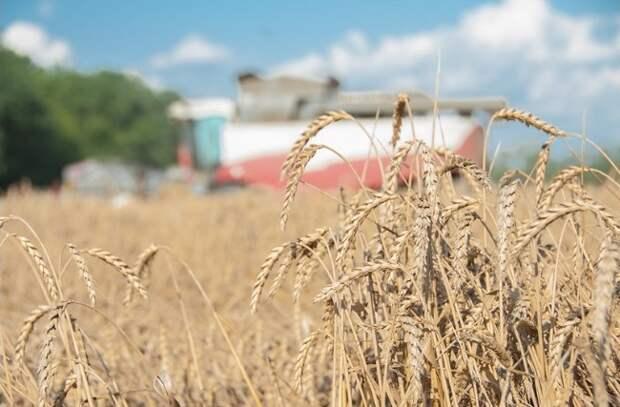 На Кубани собрали свыше 6,3 миллиона тонн зерна