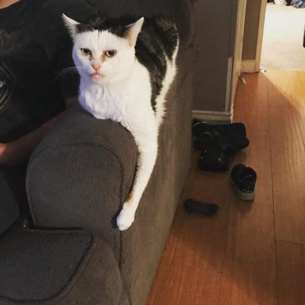 10 угарных фото кошки Марлы, которая похожа на Стива Бушеми