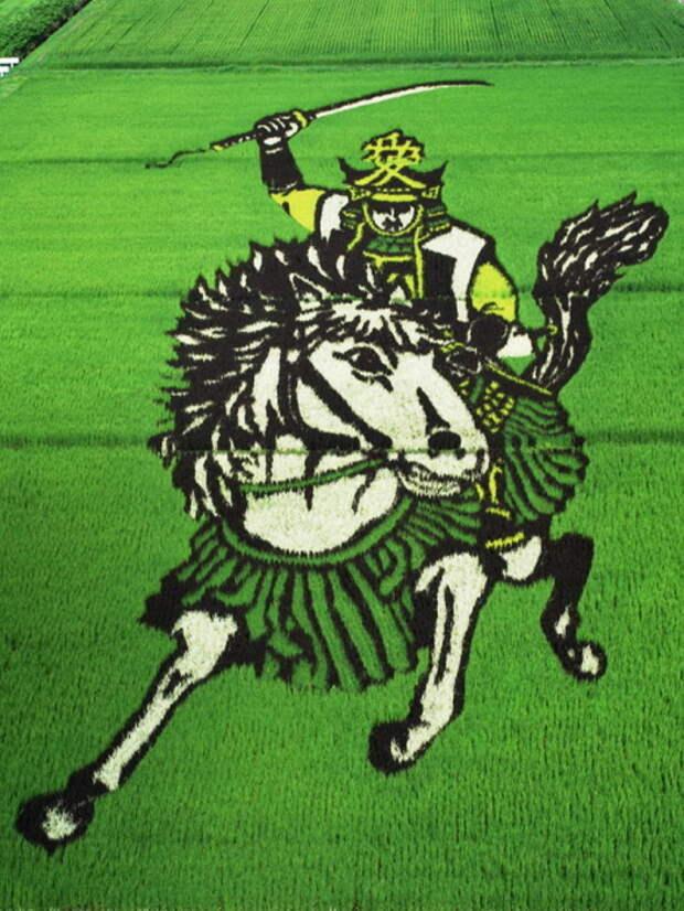 landart06 Необыкновенные картины на рисовых полях