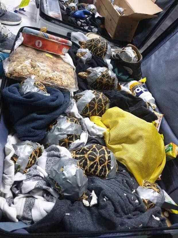 черепахи в чемоданах