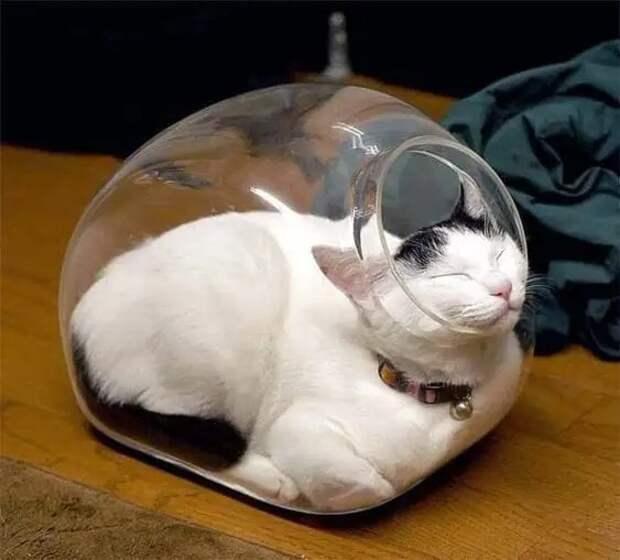 25 странных мест, ставших кошачьей спальней. Логику кошек никто не поймет