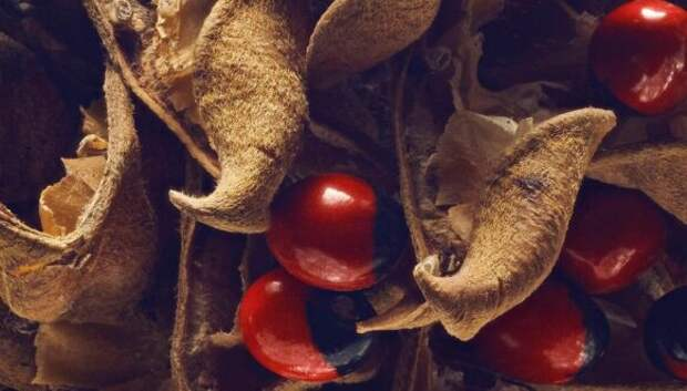 Скрытая красота семян и фруктов от британского фотографа Левона Бисса