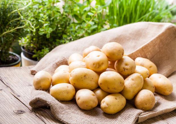 Оздоравливаем картофель на свету