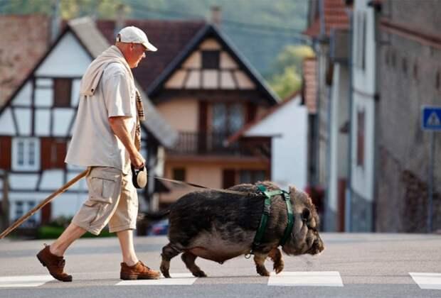 10 самых необычных домашних животных