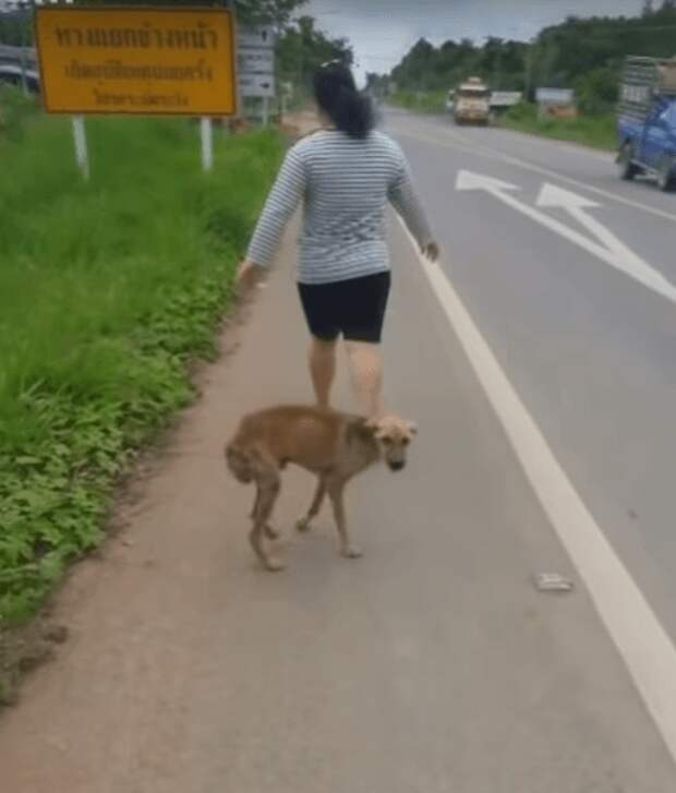 Чтобы попросить еды, маленький тощий щенок подходил ко всем прохожим, но они его игнорировали