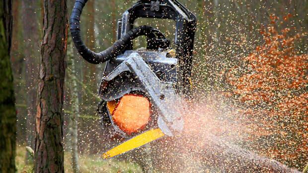 Кто вырубает русский лес? Часть 3: Воровство с таёжным размахом – миллиардами