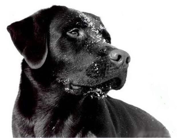 Собака спасла жизнь хозяина приняв удар тока на себя!