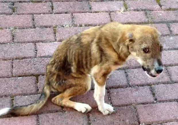 Как бездомный щенок с травмированным позвоночником нашел дом за 8 000 километров!