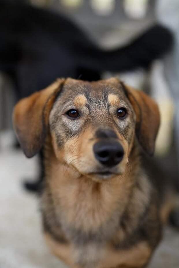 Знакомьтесь, Топик: сладкий, ласковый пёс, который вместе с вами хочет радоваться жизни!