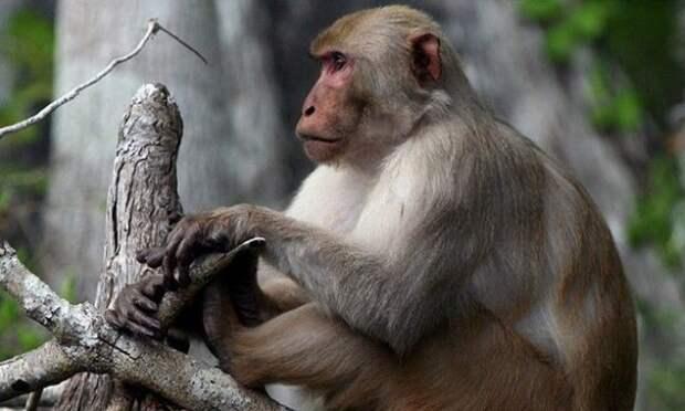 обезьяна на ветке дерева