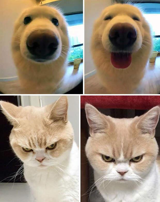 17 доказательств, что доброе слово приятно только собаке, а кошкам — все равно