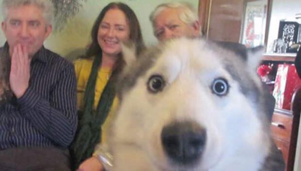 23 собаки, которые являются гениями фотобомбинга