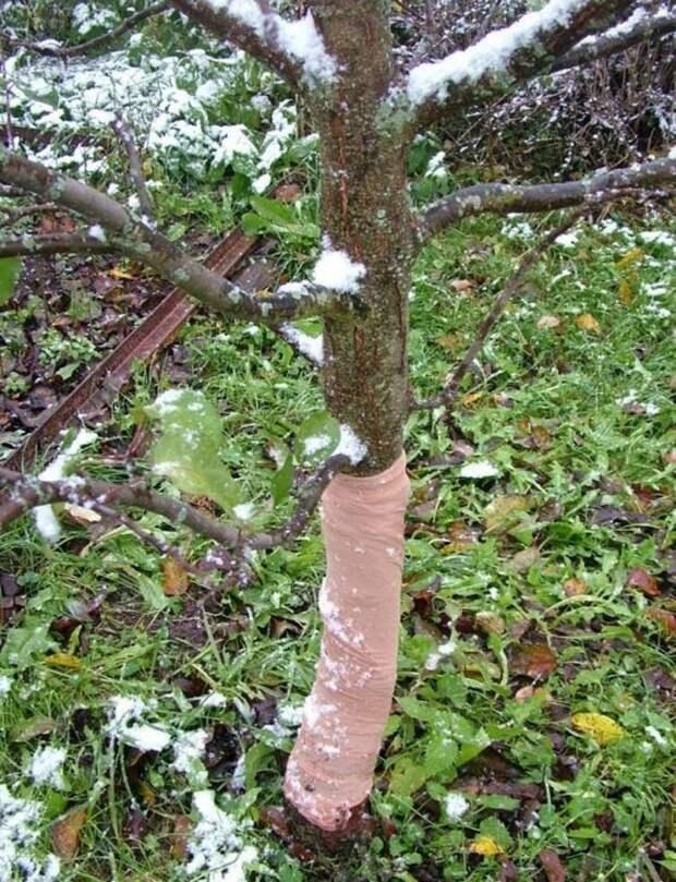 Чем покрыть деревья осенью: 3 варианта, которые эффективнее традиционных побелки и краски