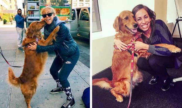 20 фотографий, которые доказывают, что собака — настоящий лучик света в нашей непростой жизни