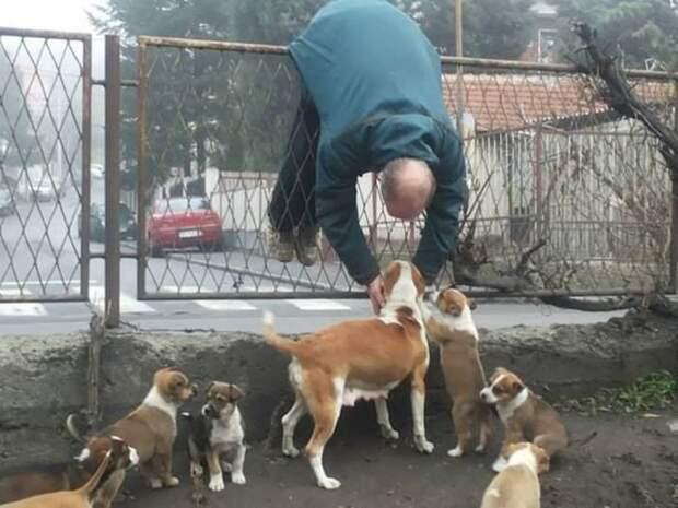 Когда очень любишь собачек, ничто не может стать преградой животные, картинки, прикол, собаки, собачники, фото, юмор