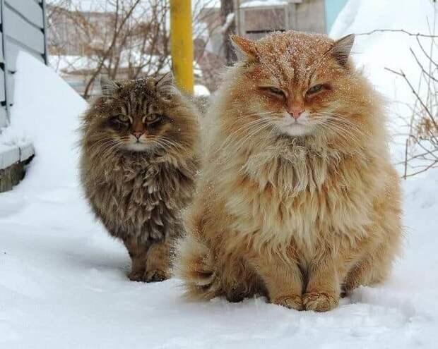 Самые красивые кошки на Земле.
