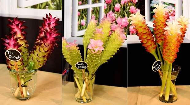 Комнатная куркума: секреты выращивания и цветения