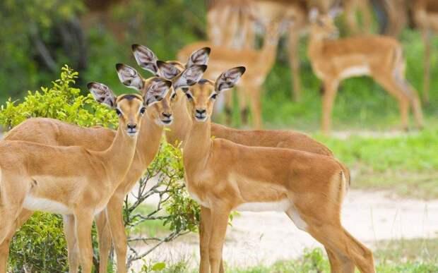 20 мест, где встречаются редкие животные