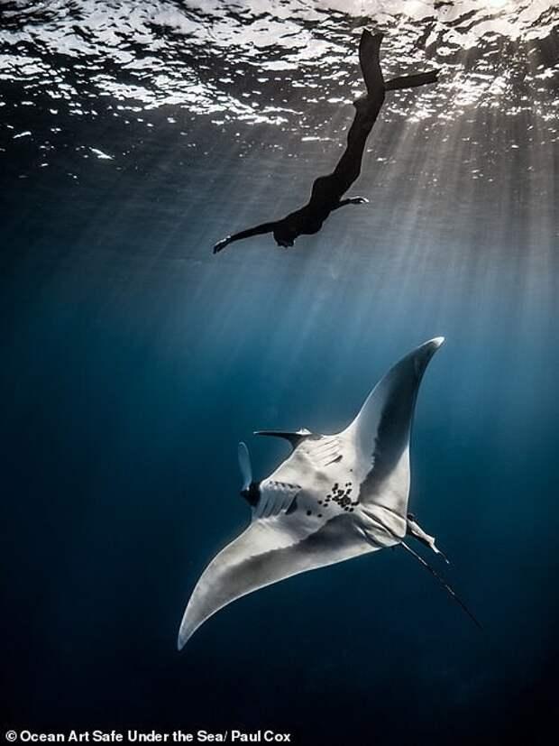 30 потрясающих снимков сконкурса подводной фотографии Ocean Art 2020