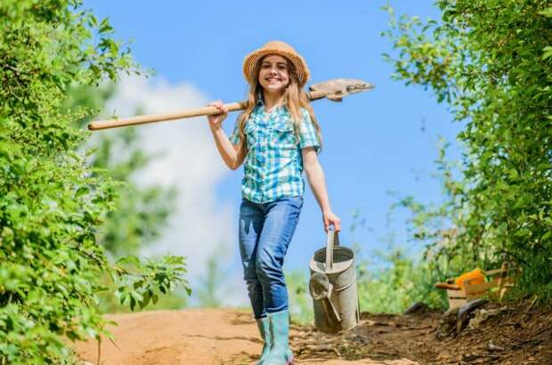 Тонкости применения органики. Топ-5 лучших видов удобрений