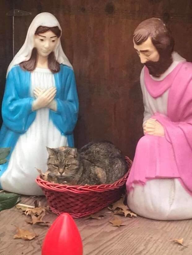 кот в рождественской постановке, кот в рождественской инсталляции, сердитый кот в рождественской инсталляции