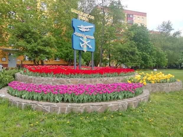 Тюльпаны распустились в Бабушкинском районе