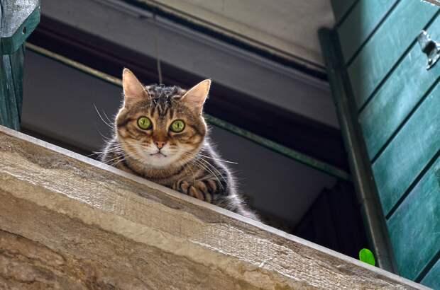 Ветеринары в Ижевске назвали самую опасную для кошек высоту падения
