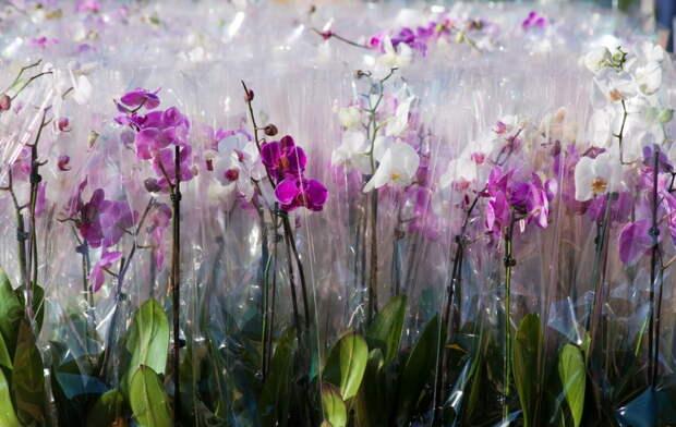 Вот как выбрать здоровую орхидею в магазине, чтобы любоваться ею годами