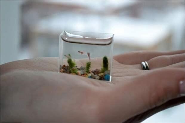 Маленький аквариум для маленьких рыб