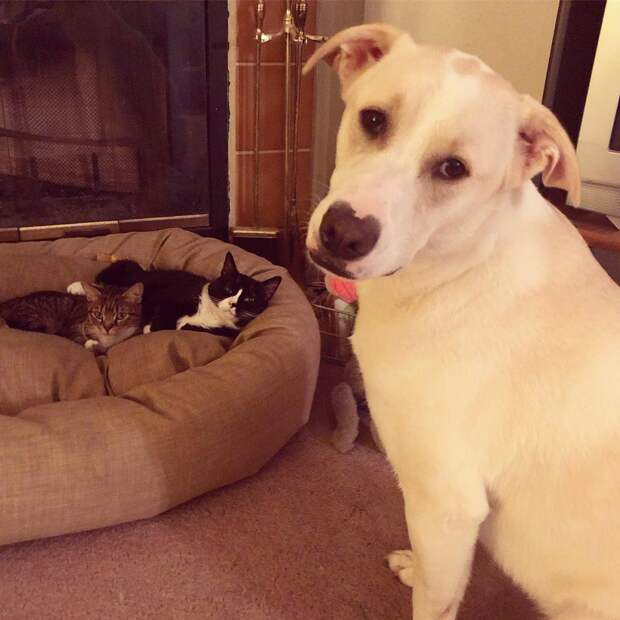 собака и два кота