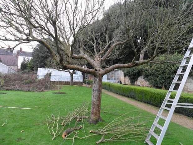 Вот зачем нужно снижать высоту деревьев